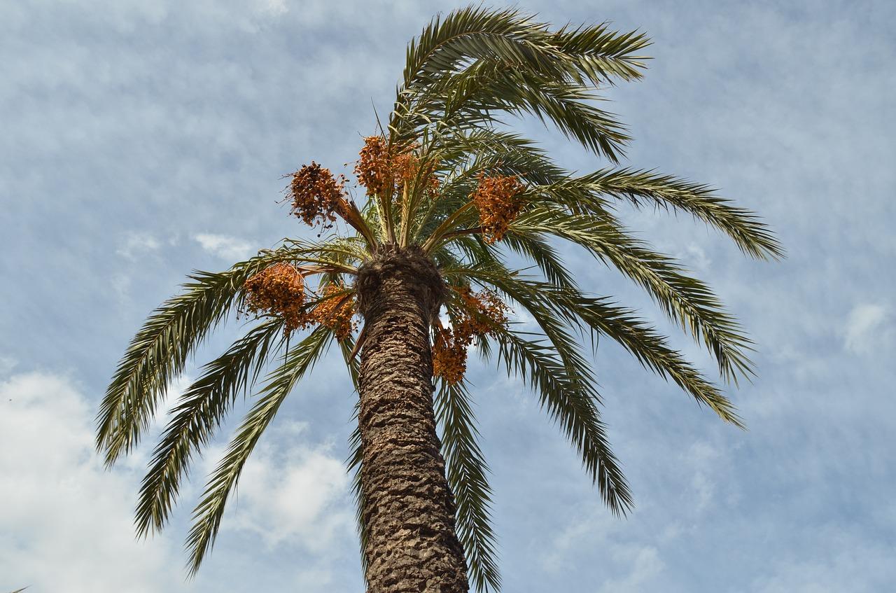 palm-1543532_1280